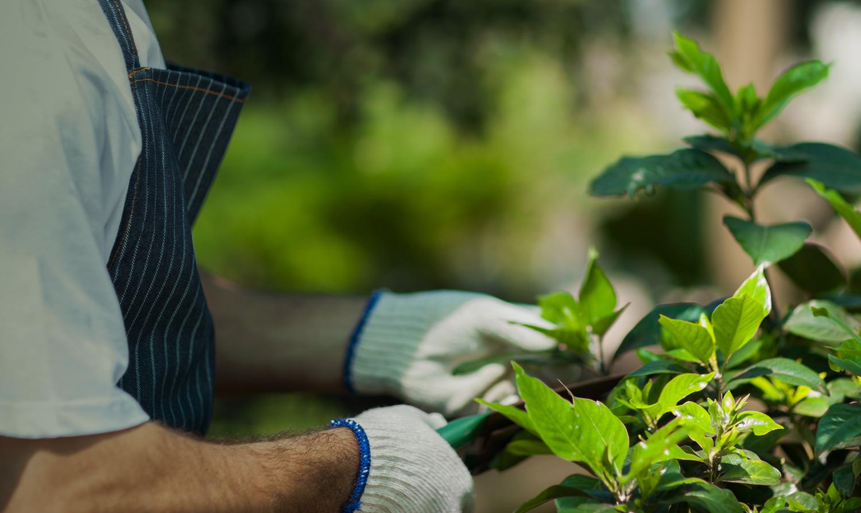 Manutenção e Conservação de Áreas Verdes